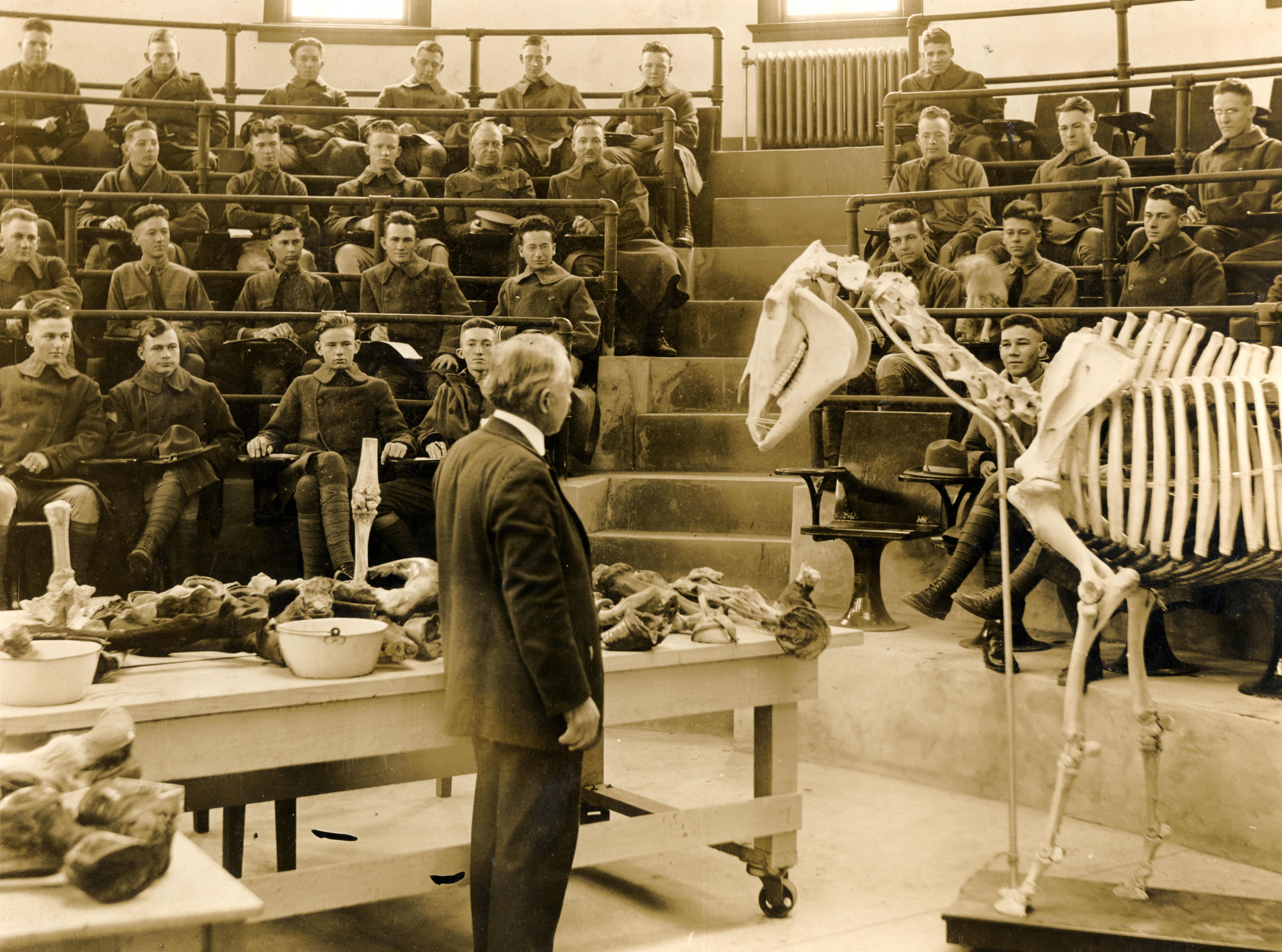 College of Veterinary Medicine & Biomedical Sciences Image Collection